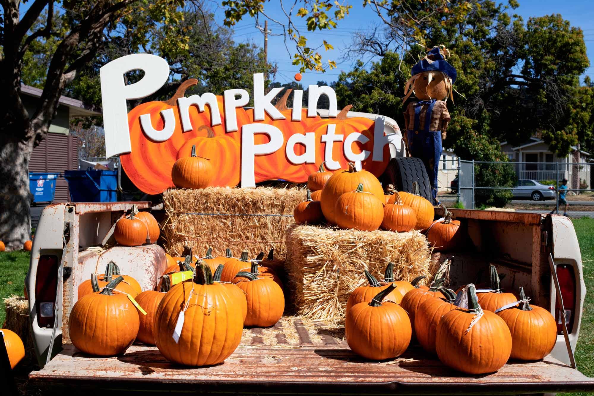 Pumpkin-Patch-2000x1333